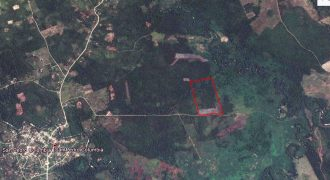 57 Acres of Fertile and Flat Land in Southern Belize| Land in Belize