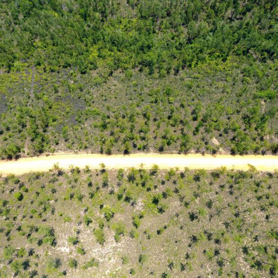 10 Acres in Mountain Pine Ridge Reserve| Near Privassion Creek| Real Estate in Belize