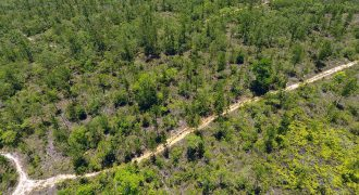 6 Acres in Mountain Pine Ridge Reserve| Land in Belize