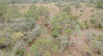 200 Acres of Prime Land in Belize District| Land in Belize