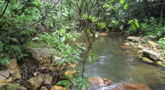 110 Acres at the foot of the Sleep Giant Mountains| Real Estate in Belize