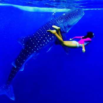 whale shark Belize