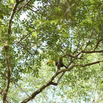 birding cayo