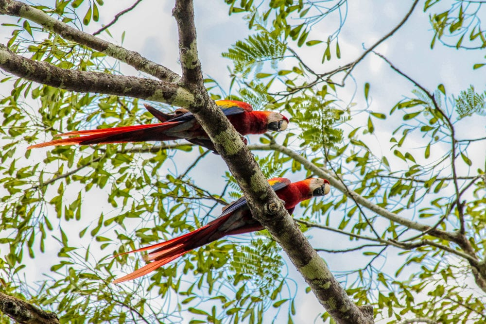 Birdwatching in Belize - Caribbean Culture and Lifestyle