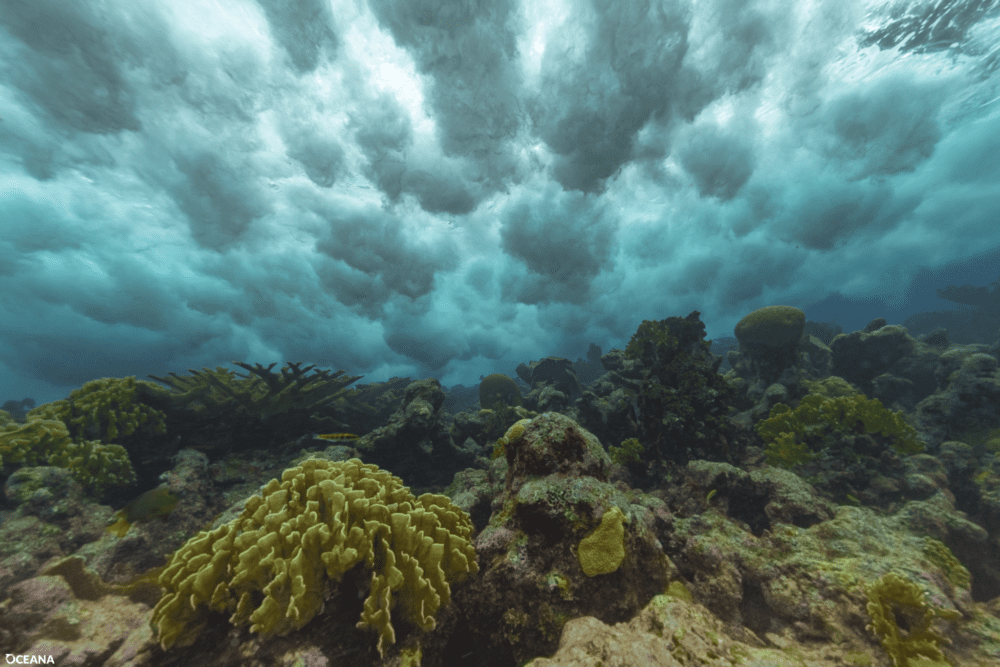 Caribbean Culture and Lifestyle: Reef Week
