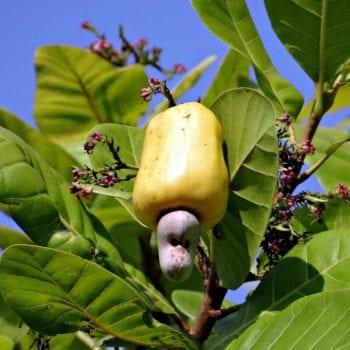 tree-nature-branch-blossom-plant-fruit-1340585-pxhere.com_-1000x667