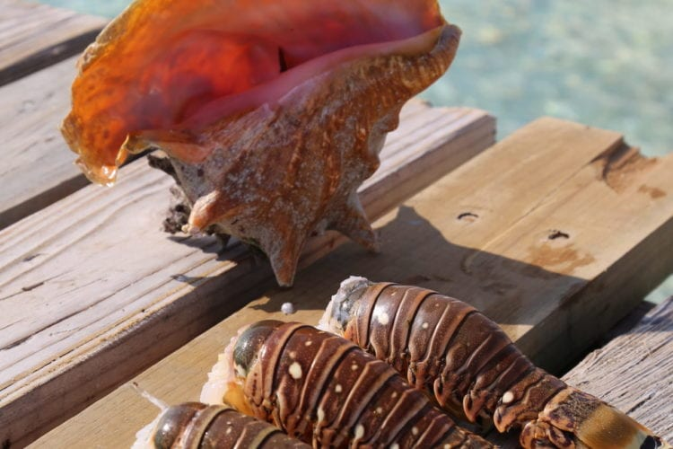 conch and lobster