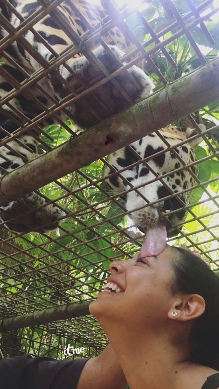 jaguar encounter