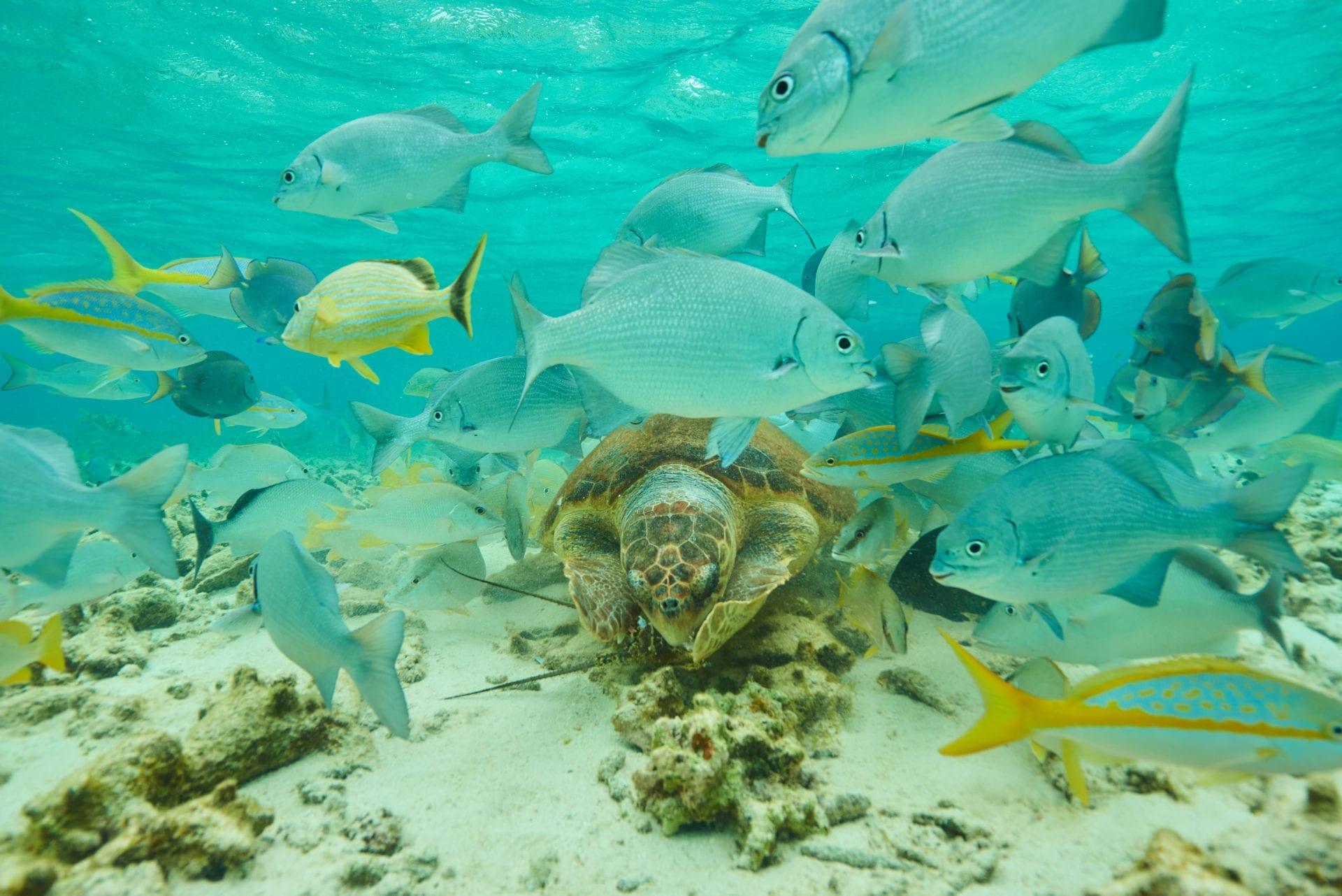 turtle-fish-coral