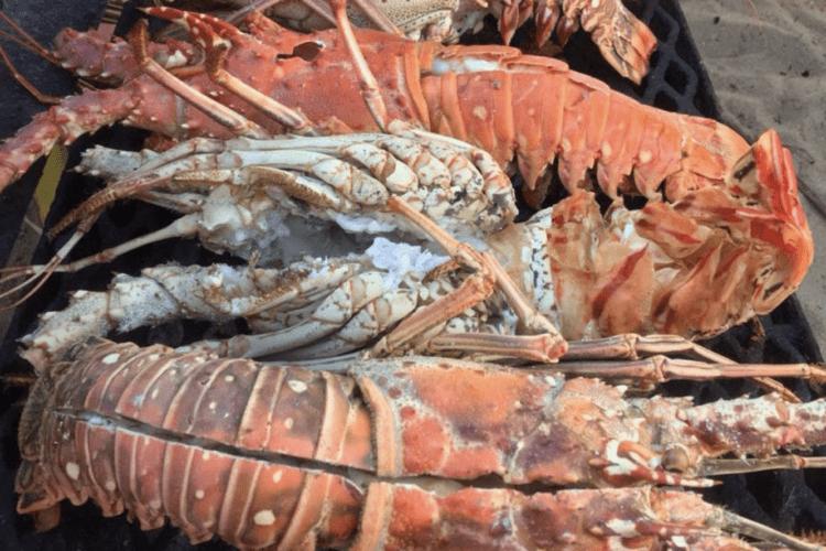 lobster fest 2020