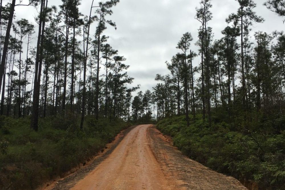 mountain pine ridge road