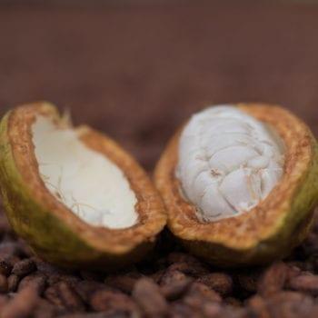 cacao - chocolate festival 2020