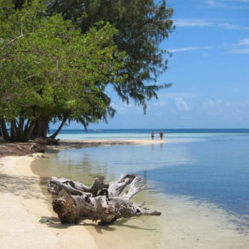 spotting turtles at south water caye