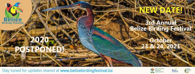belize birding festival 2021