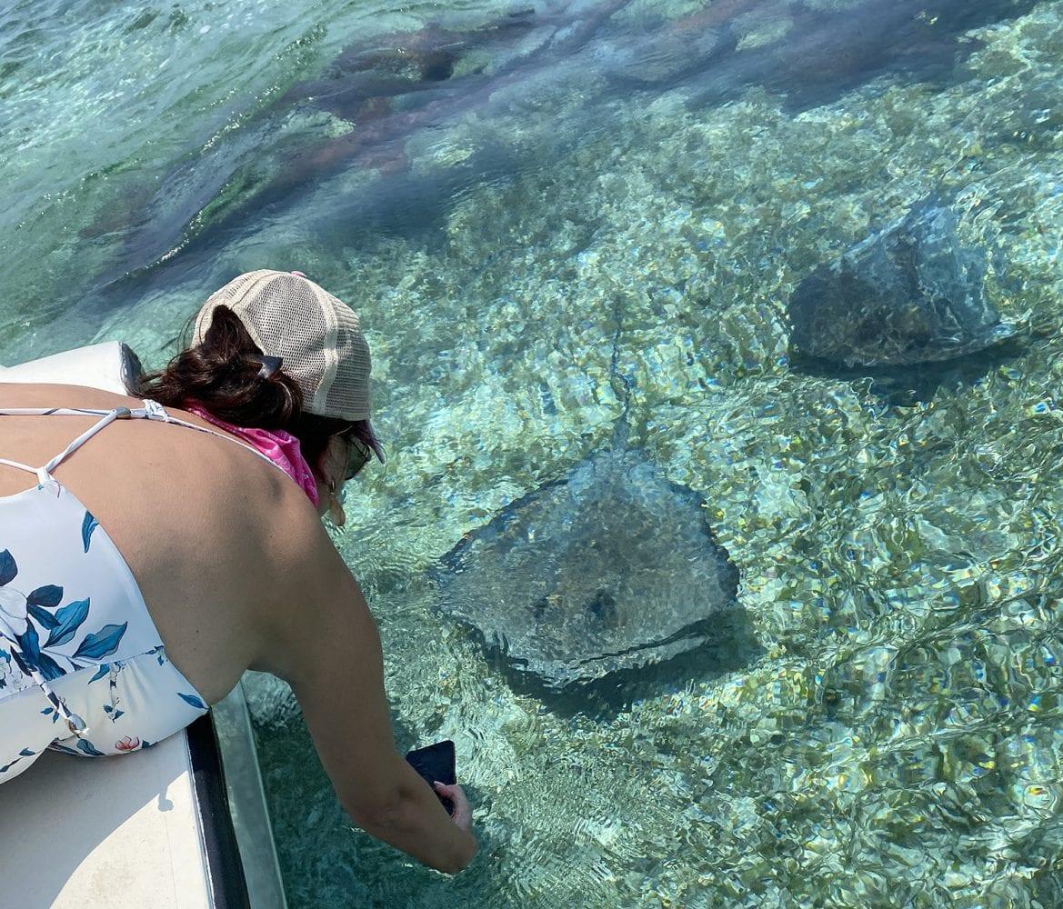 Stingrays Ocean