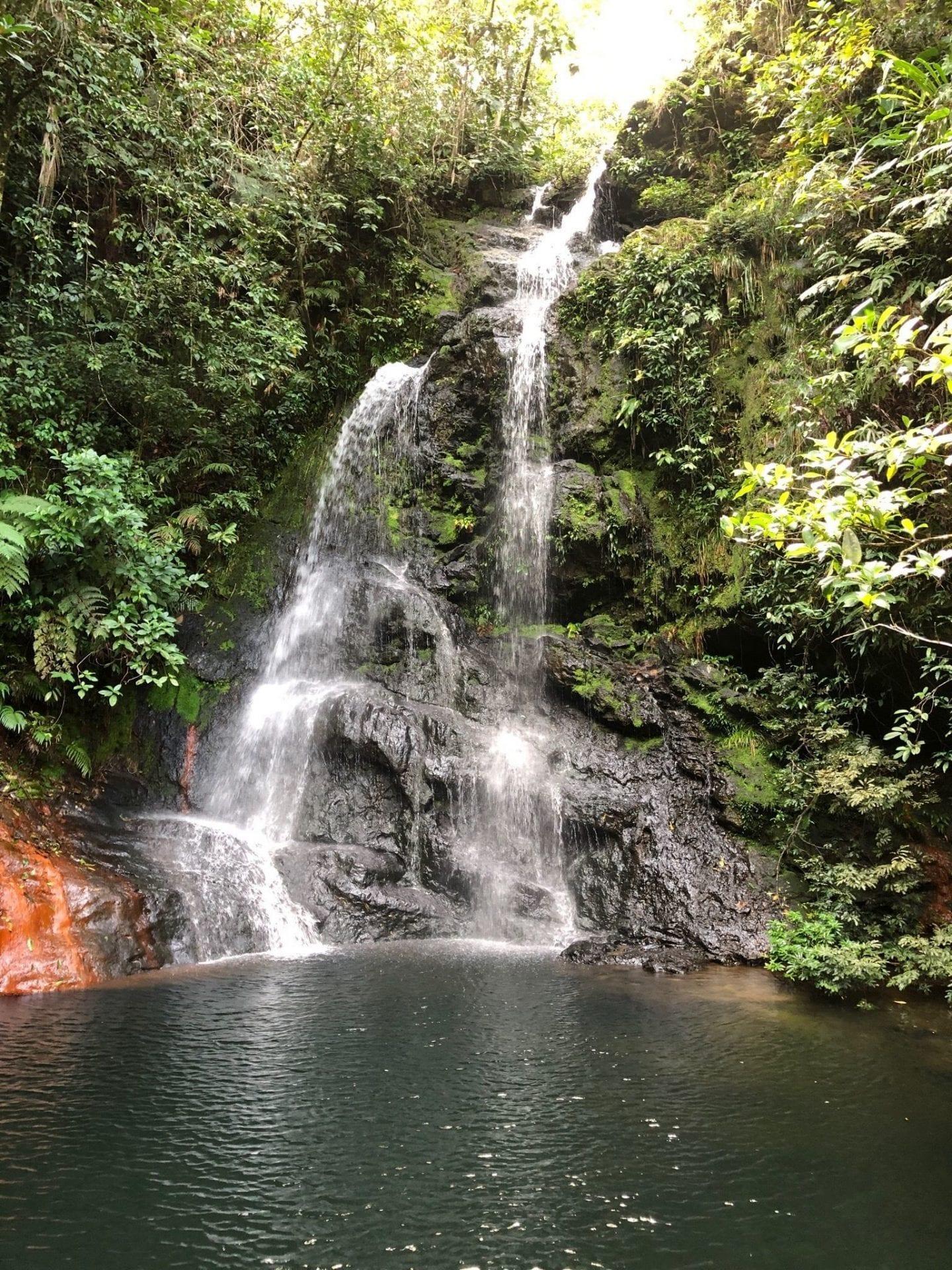 Mustafa Kothawala tiger fern waterfall