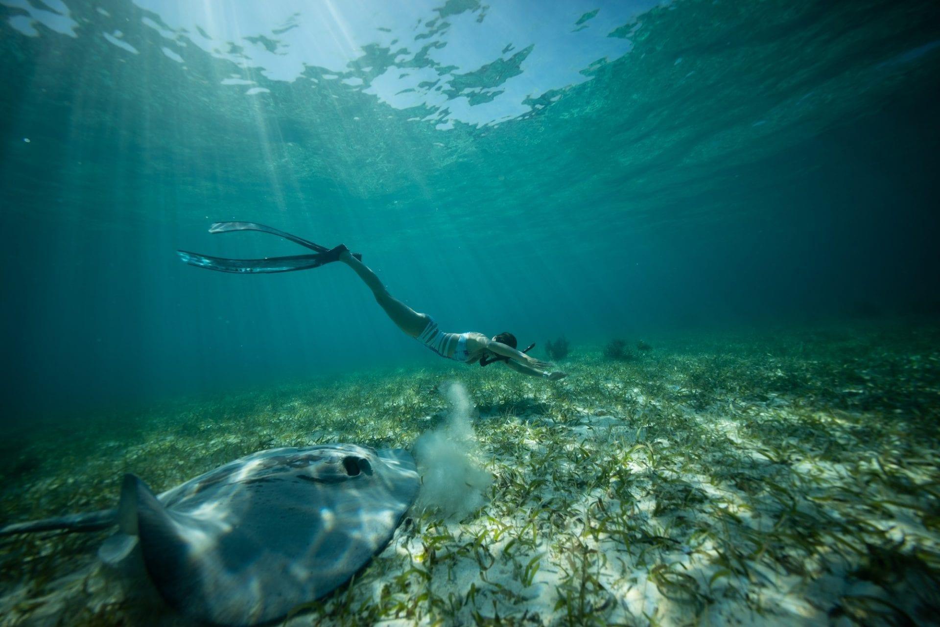 underwater stingray ranguana caye