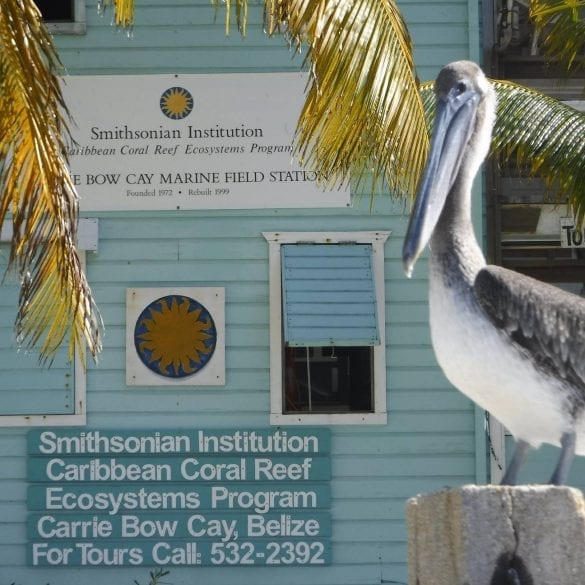The Smithsonian Institute marine field station on Carrie Bow Caye
