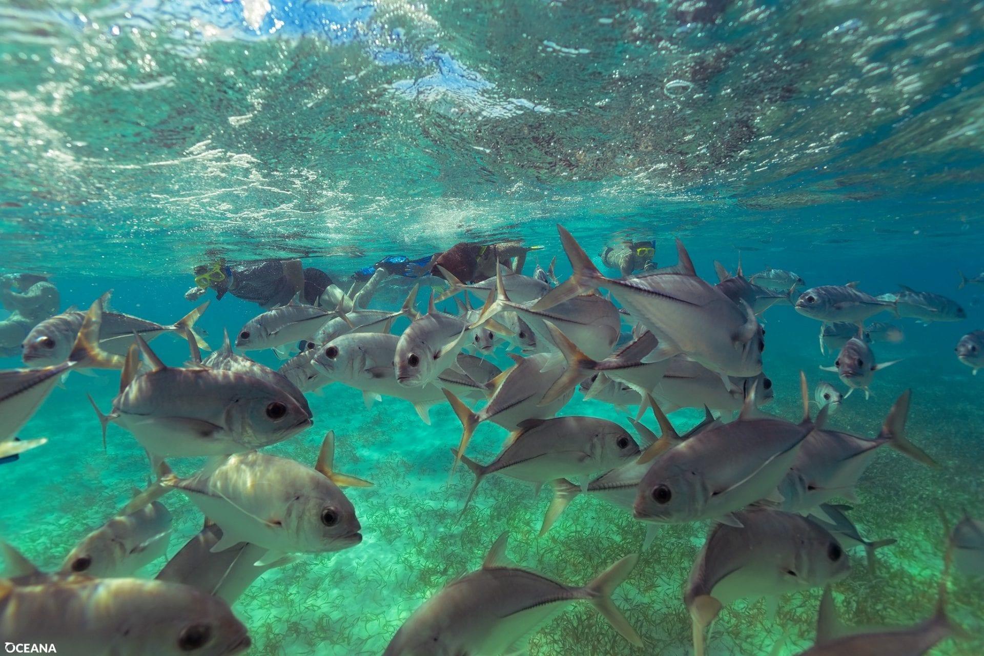 oceana underwater fish