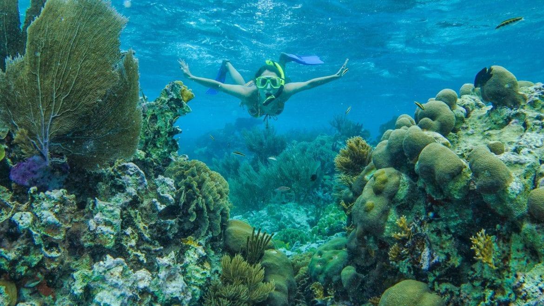 snorkeling caribbean belize underwater