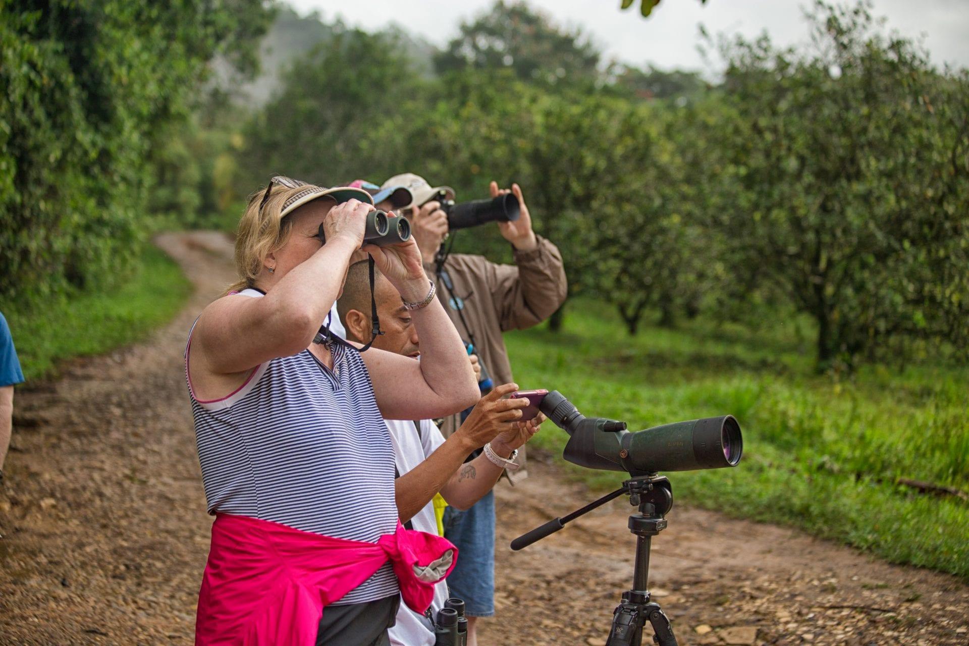 belize birder destination birding nation