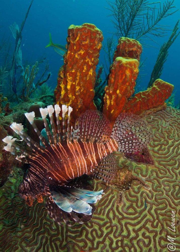 lionfish hunting belize