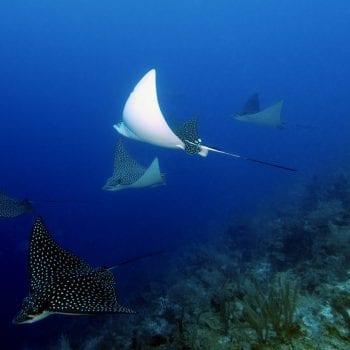 ©MLowen via Splash Dive Center