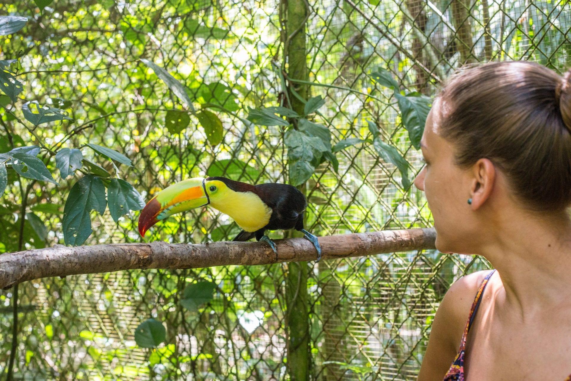 BelizeZoo6 toucan