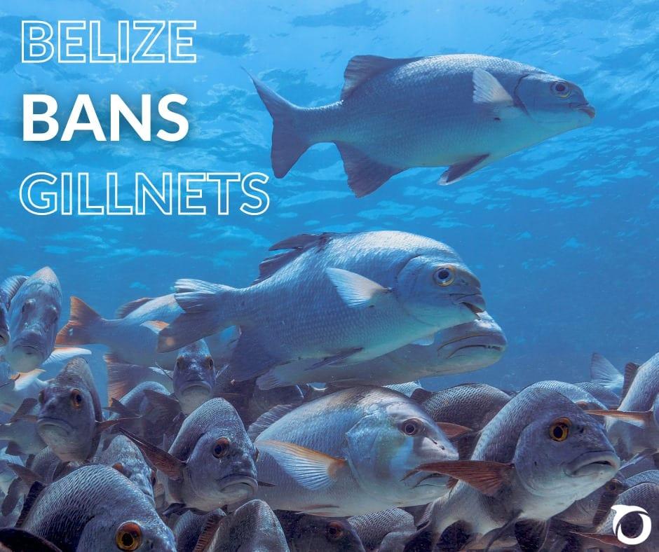 belize bans gillnet fishing Belizean waters oceana