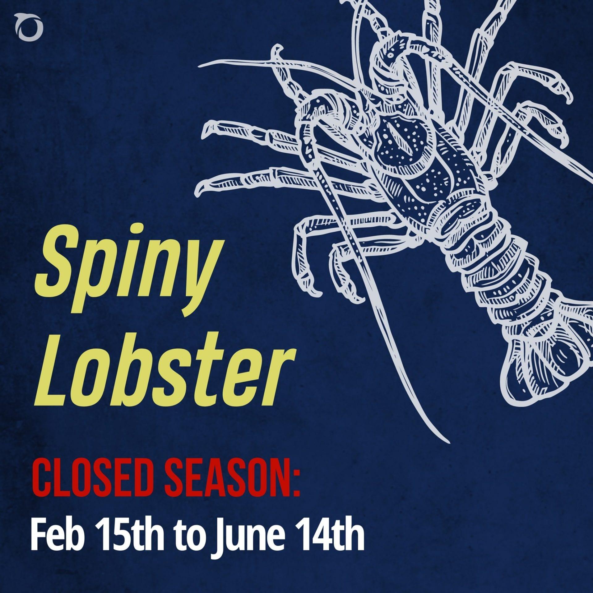 spiny lobster season