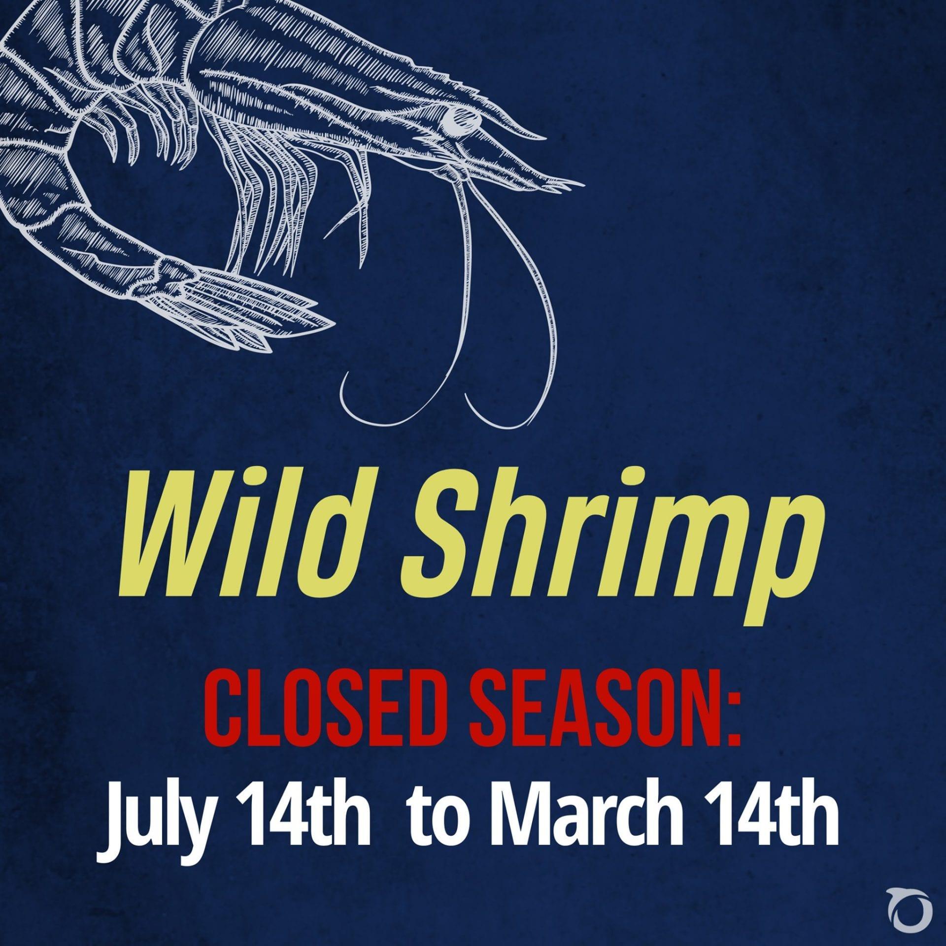 wild shrimp season