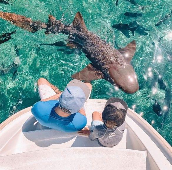 shark family belize spring break