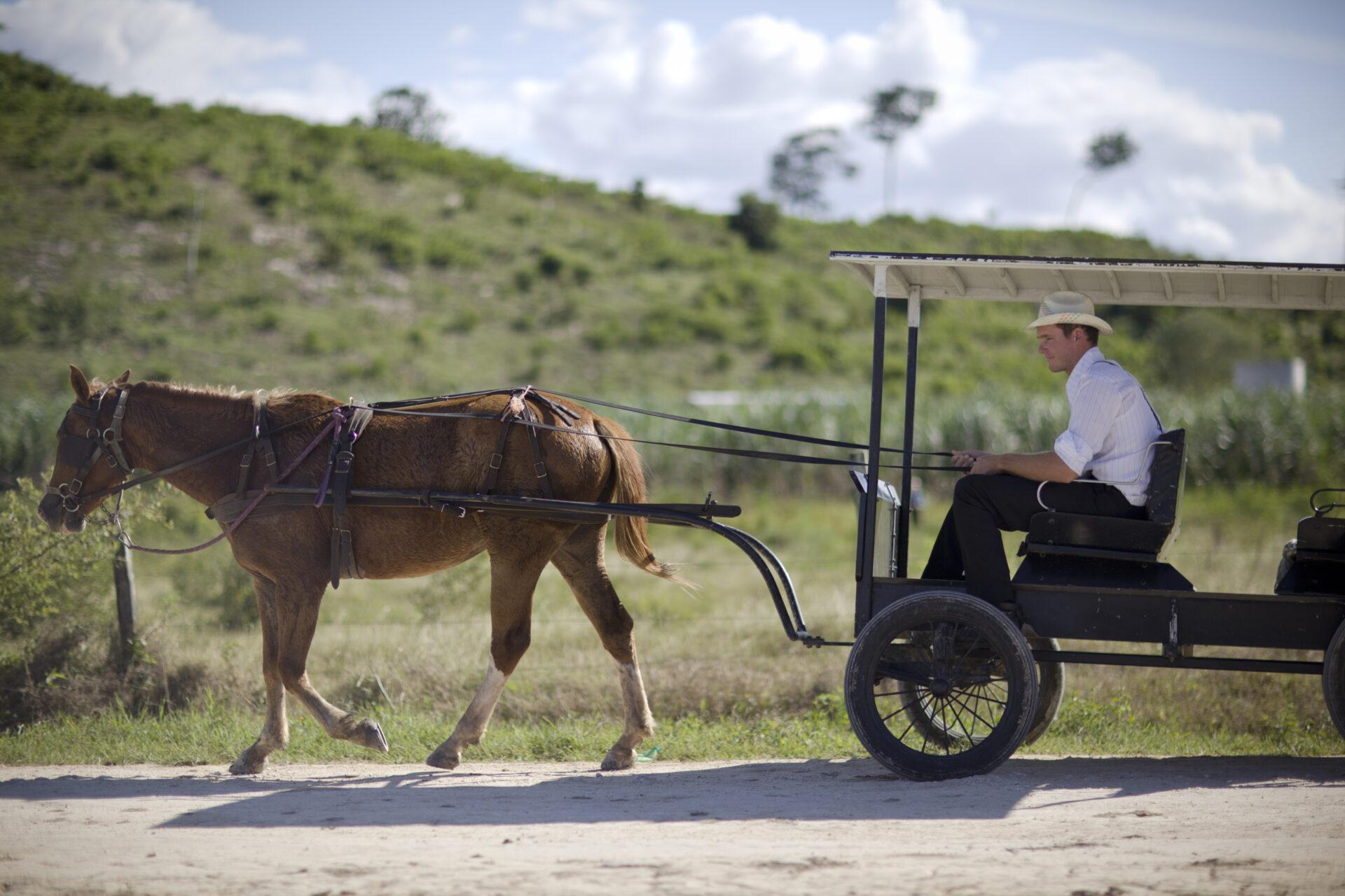 mennonites-horse-carriage-belize-tourism-board